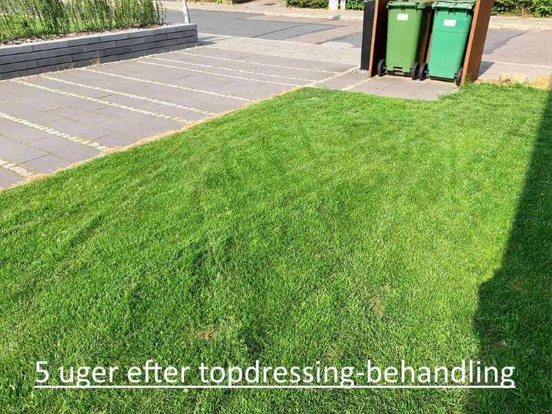 Græsplæne 5 uger efter topdressing behandling