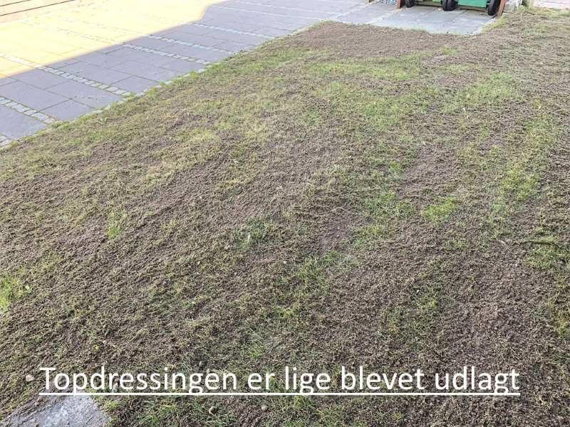 Græsplæne med topdressing på