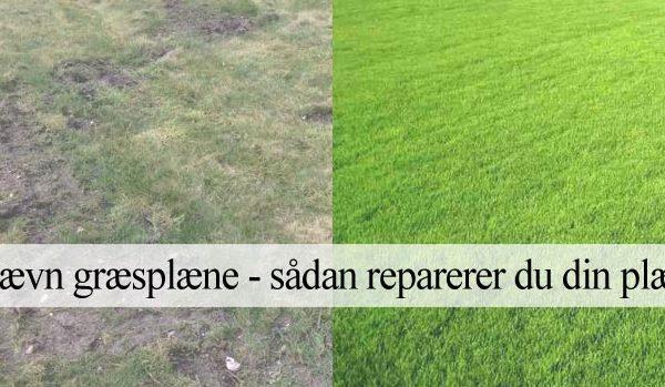 ujævn græsplæne guide