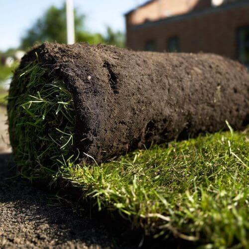 Billig rullegræs