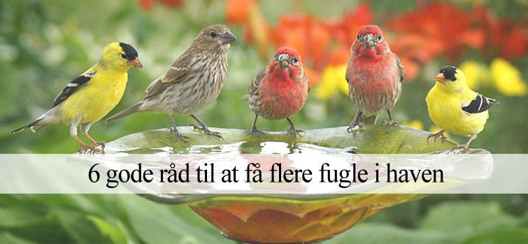 få flere fugle i haven