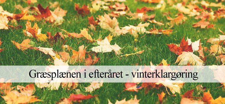Græsplænen i efteråret