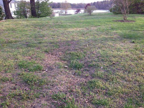 Beskadiget græsplæne