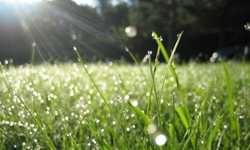 Våd græsplæne med solskin