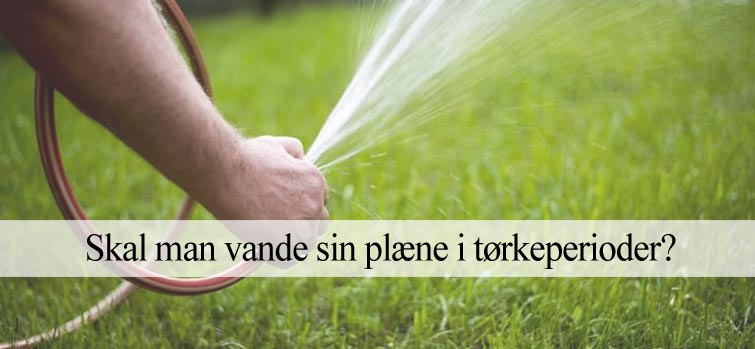 Skal man vande sin græsplæne?
