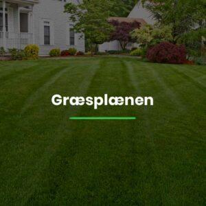 Græsplænen