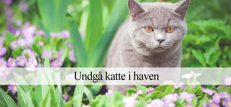 Undgå katte i haven