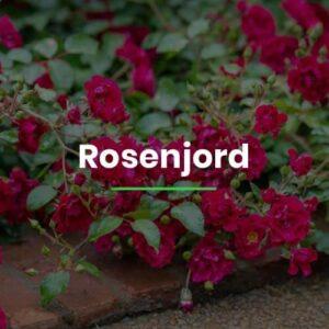 Rosenjord