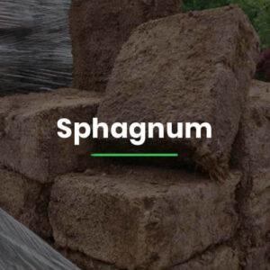 Sphagnum