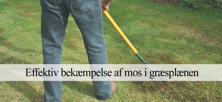 Fjerne mos i græsplænen