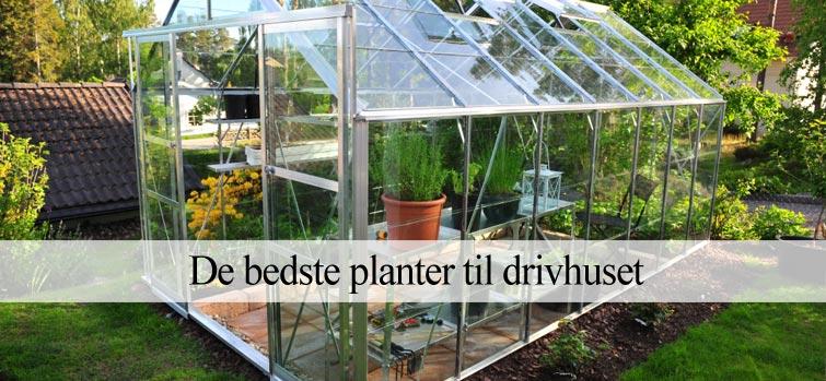 Gode planter til drivhuset