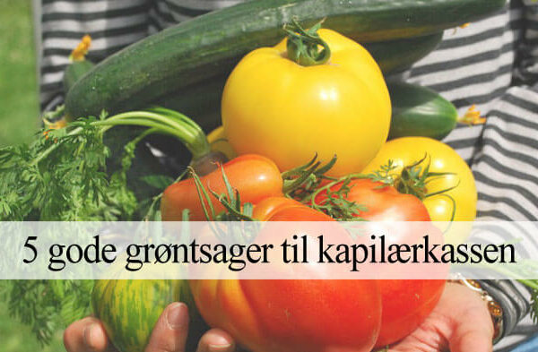 Grøntsager i kapilærkasse