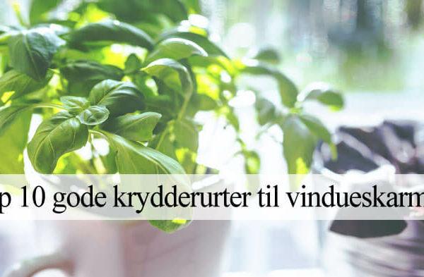 Bedste krydderurter til vindueskarm