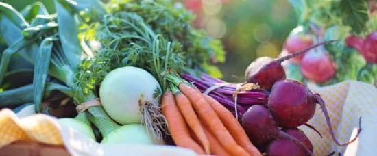 dyrkningsvejledning grøntsager