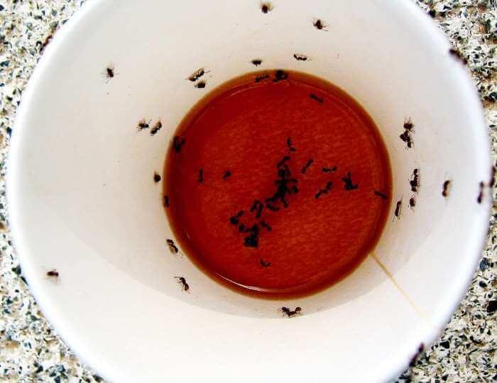 Hjemmelavet myrerfælde