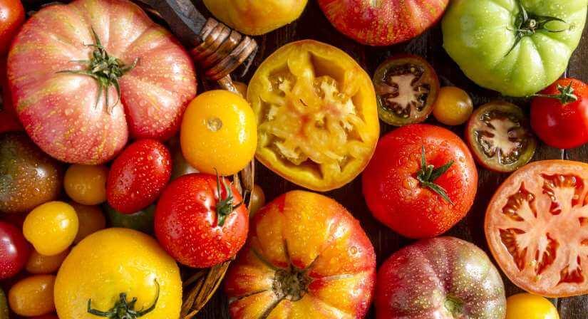 Tomatsorter