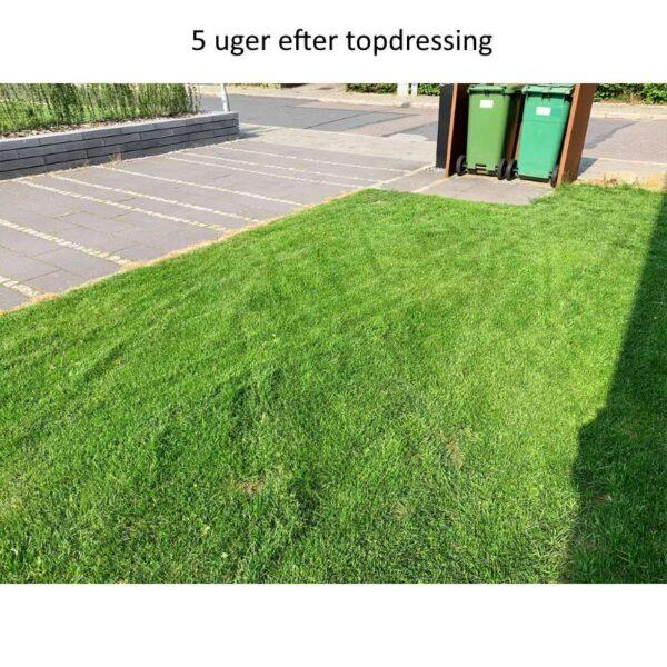 resultat af topdressing græsplæne