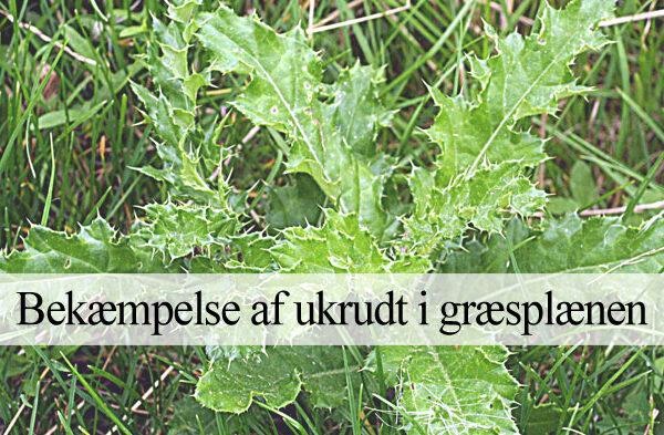 Bekæmpelse af ukrudt i græsplæne