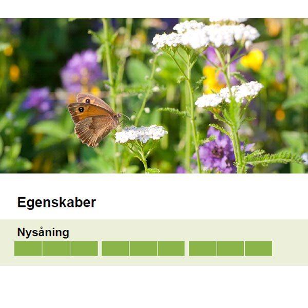 blomstereng græsfrø egenskaber