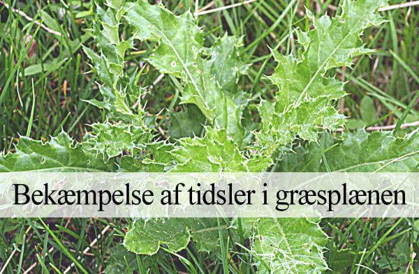 Tidsler i græsplæne