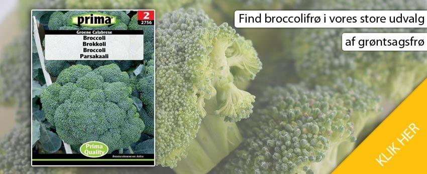køb broccolifrø