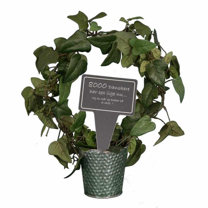 Image of   Sjovt planteskilt - 8000 danskere