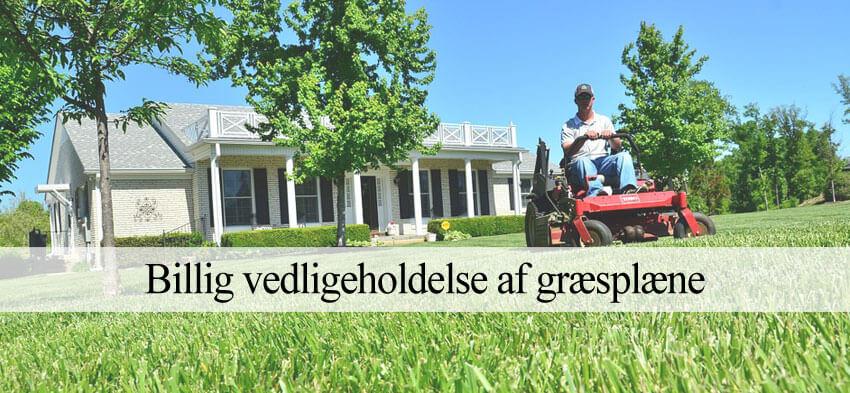 græsklipning erhverv