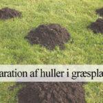 muldvarpe i græsplæne