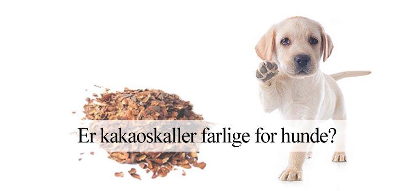 kakao-flis og hunde