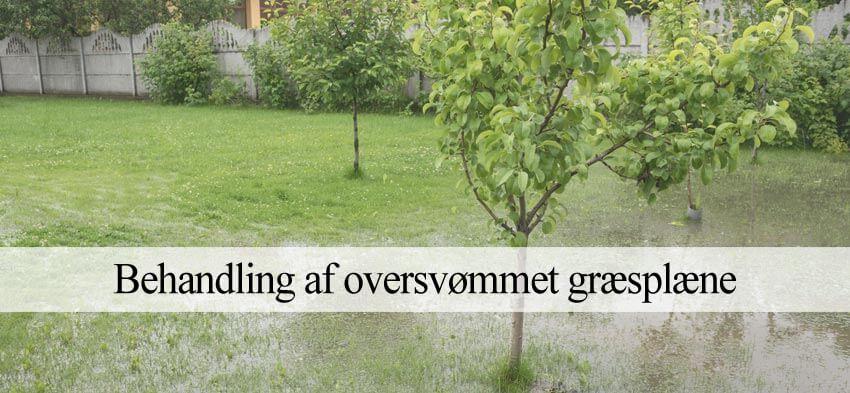våd og sumpet græsplæne