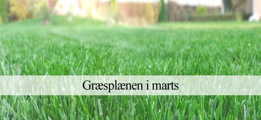 Græsplænen i marts