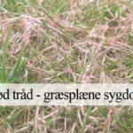 rødtråd græsplæne