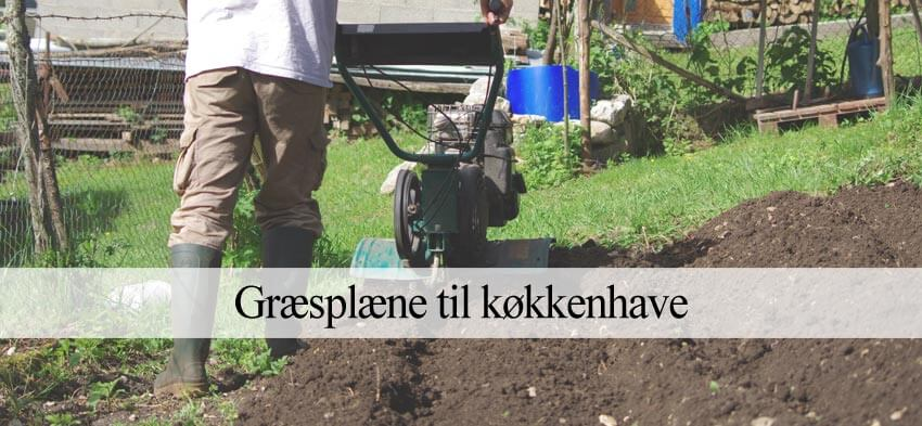 græsplæne til køkkenhave