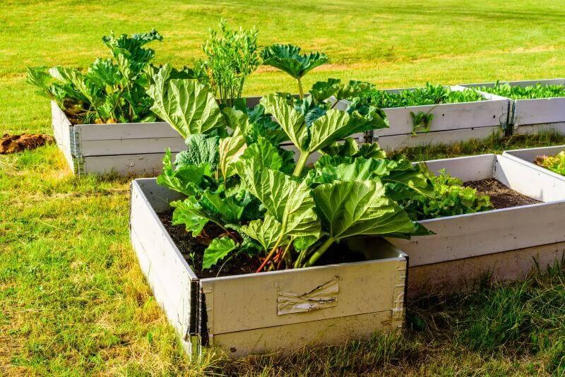 højbed med friske grøntsager