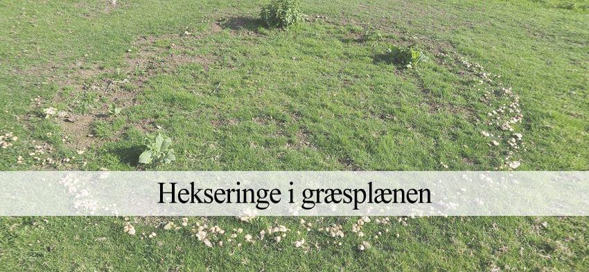 græsplæne med hekseringe