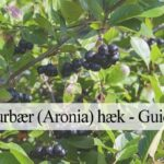 aronia hæk guide